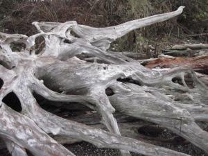 Driftwood, Chambers Bay